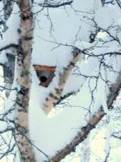 Bilde av vinterbolig foto Terje Brænd