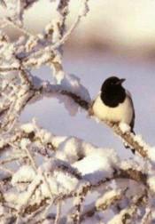 Bilde av vinterskjor