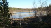 Bilde av vår ved Næråtjønnet. Foto Hans Sollid