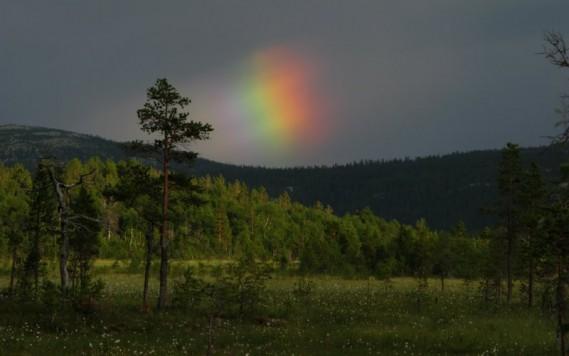 Bilde av Ved Hessetjørna ,foto Kristian Dillerud