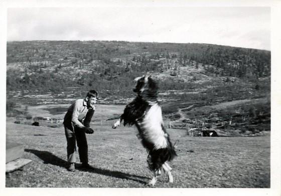 Bilde av bukker, foto Rolf Øvergaard