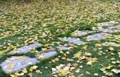 Bilde av høstgule ospeblader foto Jo Øvergaard