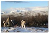 Bilde av jakthunder