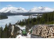 Skog og miljø