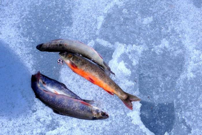 Påskefisk... foto Jo Øvergaard