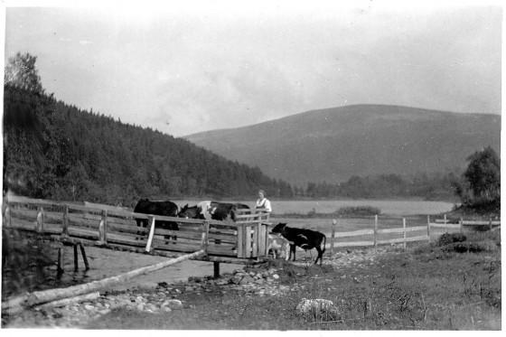 Bilde av brua over ved Buvollen. Foto utlånt av familen etter Alma og Thorvald Kulstad
