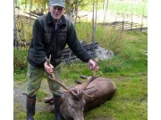 Jakt gir trekk av hjorten