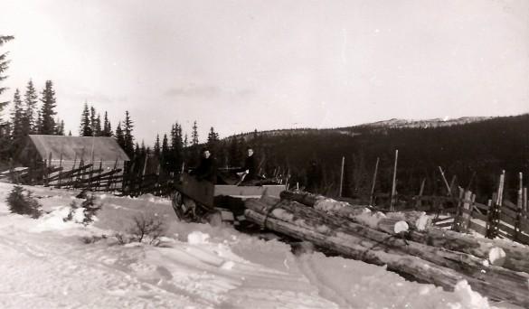 Tømmerkjøring på Mokjølen rundt 1950. Foto utlånt av etterkommerne etter Ambros Sollid