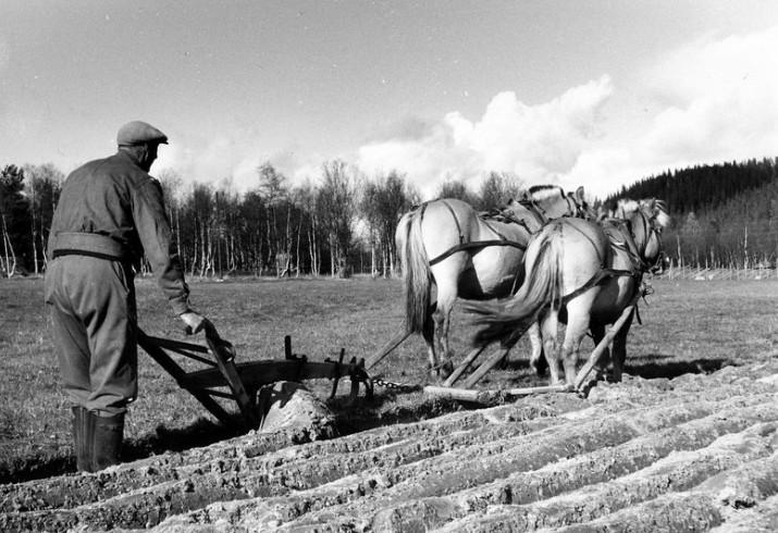 Ingmar Morken pløyer med 2-spann foto Edv K.Barth 1964