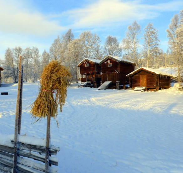 Fra tunet på Amperhaugen i Sollia. foto Jo Øvergaard