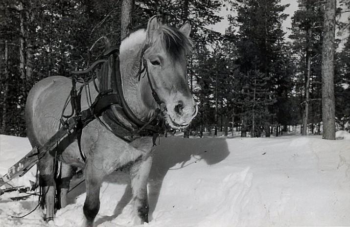 """Fjordingen """"Vesla"""" ved Trøbua ca 1959 foto Rolf Øvergaard"""