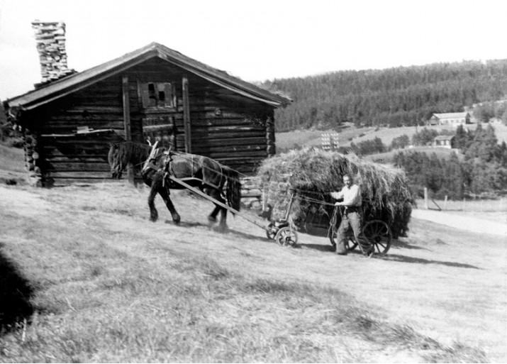 Høykjøring i Midt-Brænd. Embret A. Brænd var alltid i rute for å ha høyet i hus før rensjakta starta.