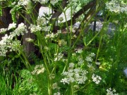 Planter i matstell og seterkosten