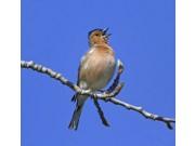 Kamp for trekkfuglene