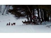Vintertid for viltet