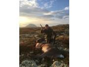 228 dyr felt i Sølnkletten