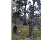 Skogen - en arena for friluftsliv og naturopplevleser