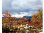 Høsten er her - del 1