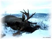 62 elger skutt