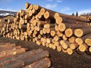 Info om skogfond