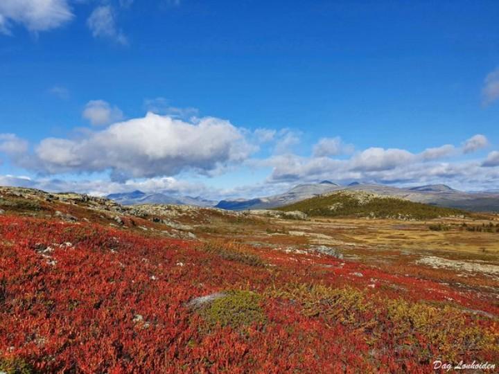 1-19 1005 høstbilde fra Finnsjøfjellet