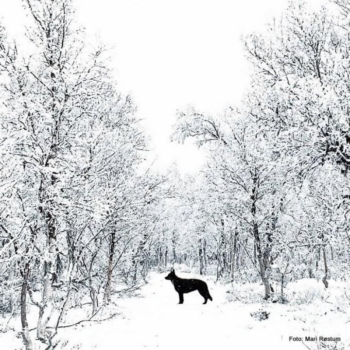 1-19 1110 hund i svart kvitt