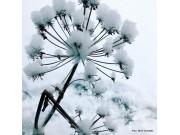 Vinterkvann
