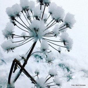 1-19 1111 vinterkvann