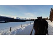 Tilbyr turer med hest og slede