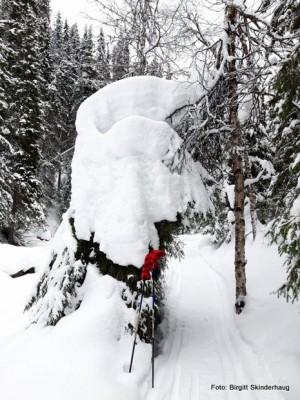 1-20 0303 fra Bekkedalen Birgitt