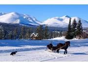Atnlien - Inn på tunet tilbyr skogsturer med hest