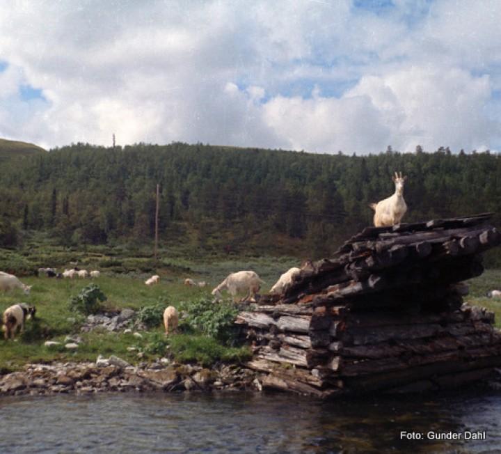 20 0323 bru overSetninga ved Bretningen 1966