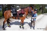 På hesteryggen til Trondhjem