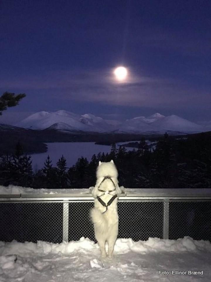 21 0130 Fullmåne og vinternatt