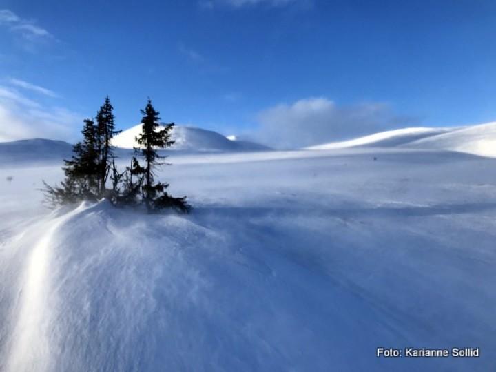 21 0308 vind i fjellet
